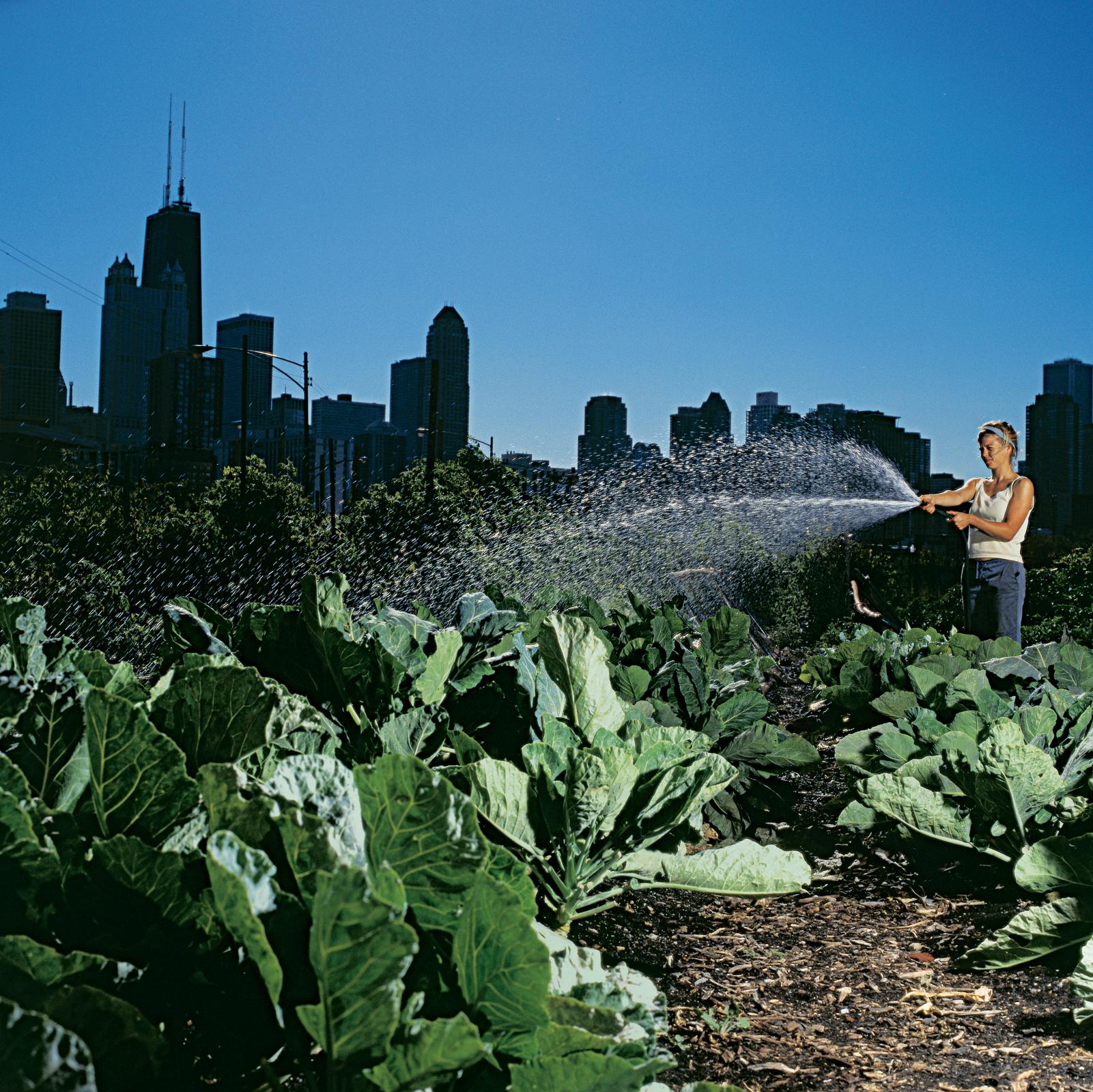 city farm garden thumbnail