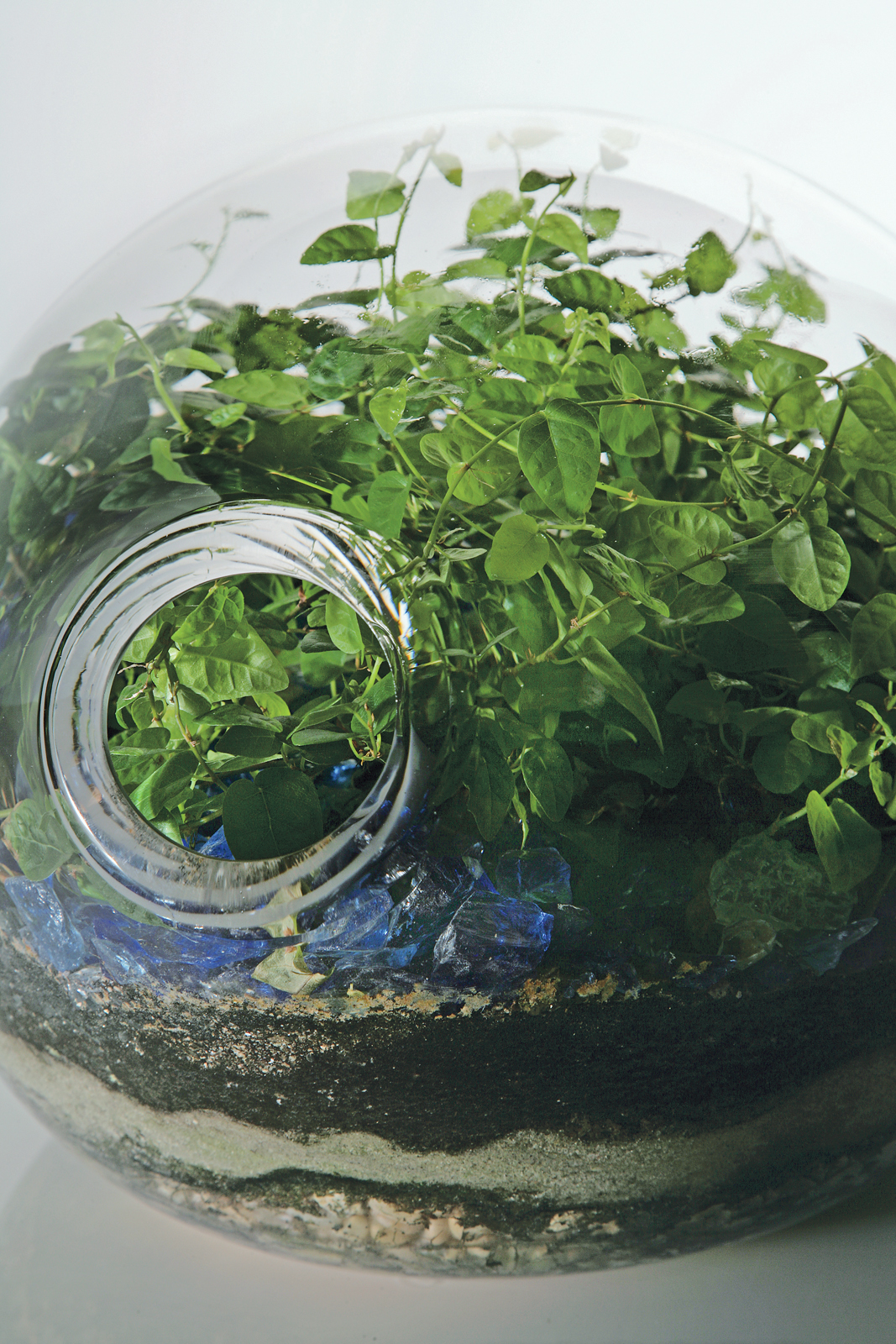 "A close-up of a custom blown- glass terrarium offers a microcosmic view of one of Hayes's lushly overgrown landscapes. Hayes produces her silicone planters in five sizes, two styles (""classic"" and ""eccentric""), and five standard color options."