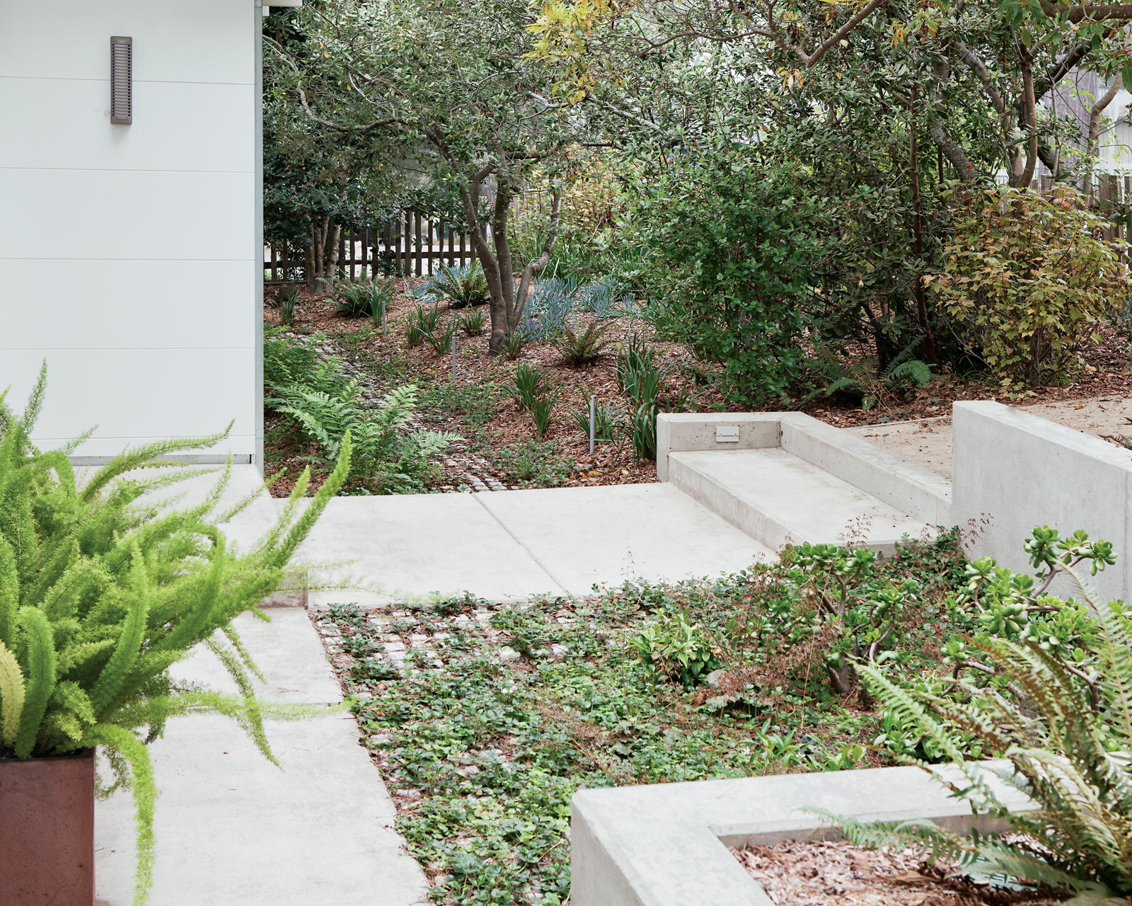 Sustainable landscaping yard with native species