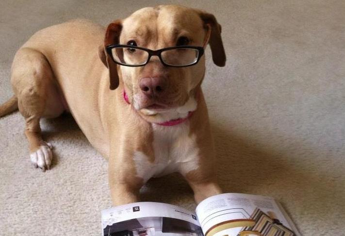 dogreadingdwellmagazine