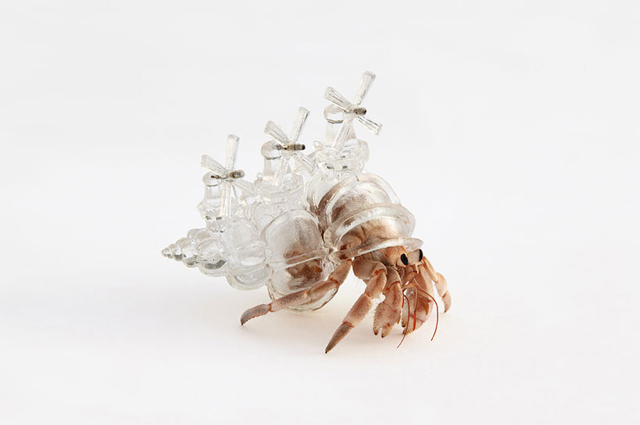 ff kelsey crab glass