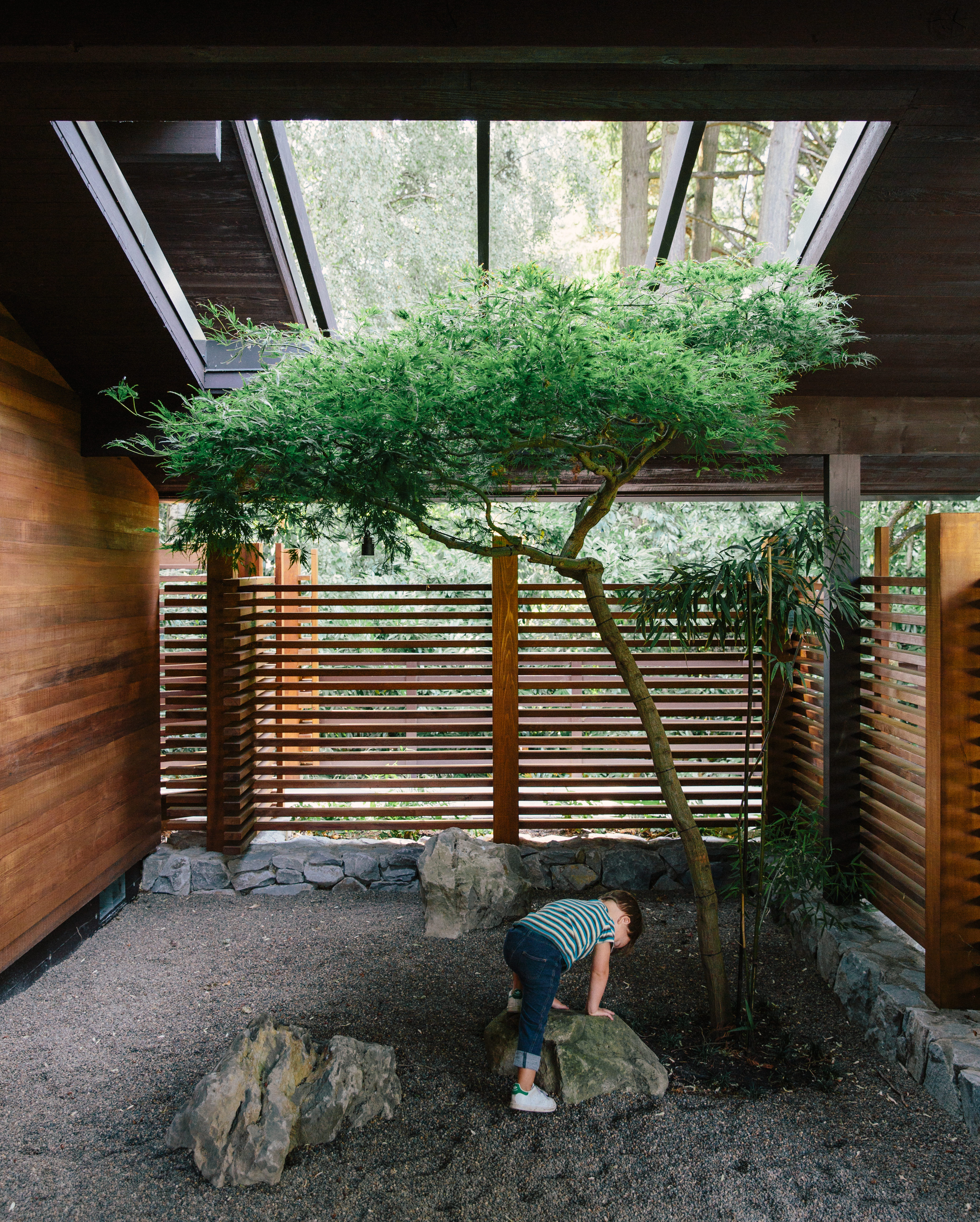 A tree grows in a renovated Portland home's interior courtyard.