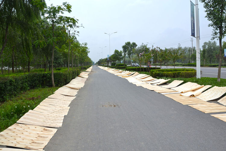 Throughout her journey, Shahid's path has been blocked by natural materials drying on the bike lanes. She's ridden around drying peanuts, branches, cotton nuts, and more. Shown here is poplar bark, which lined the bike lane for three kilometers (nearly tw