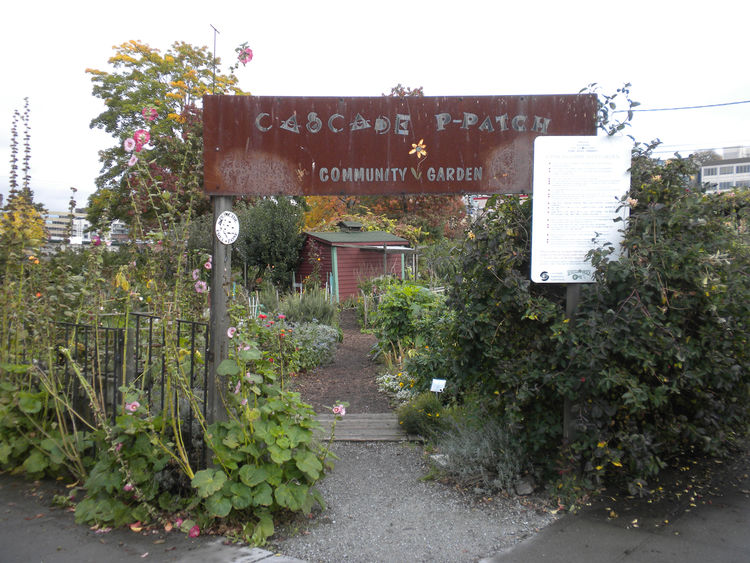 Next, it was off to Cascade People's Center for lunch. On my way, I ran into the Cascade P-Patch Community Garden. There are more than 70 P-Patches throughout Seattle that offer residents individual plots to tend. The gardens are supported by a partnershi