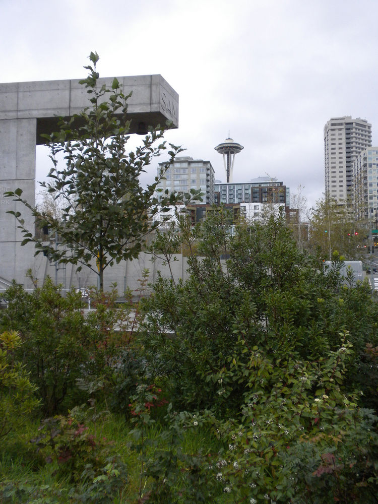 I approached the park from the south, jogging past the Edgewater Hotel and Port of Seattle along Alaskan Way, and entered at the southwest corner, with the slope—and the Space Needle—to my left.