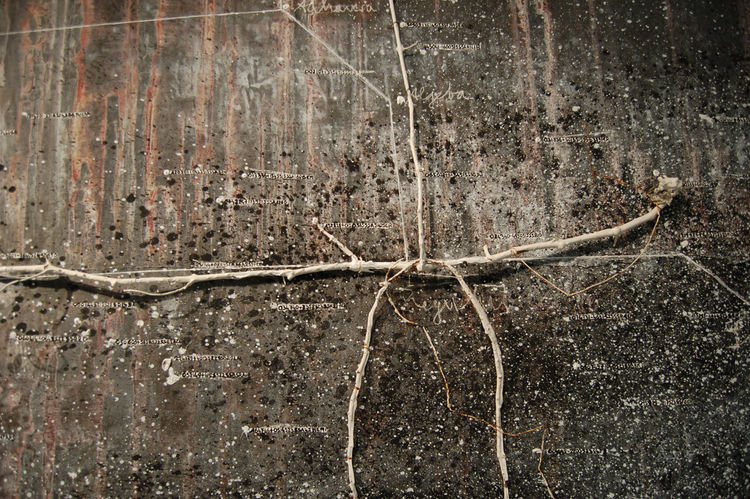 Another striking work—The Secret Life of Plants, 2001-02, by German painter and sculptor Anselm Kiefer.