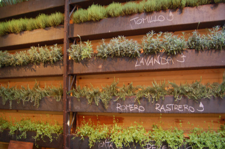 One of my favorite touches inside the restaurant—a wall of flowering herbs and other greenery.