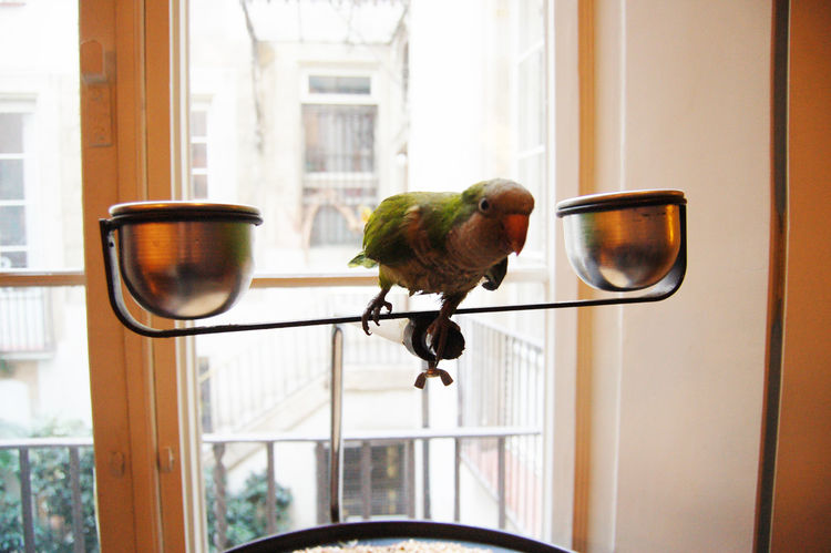 After lunch we marched a scant few steps to the residence of architect Benedetta Tagliabue, who along with her husband coaxed the building—which dates back hundreds of years—from a state of ruin into a magnificent and singular home. Her parrot serves as n