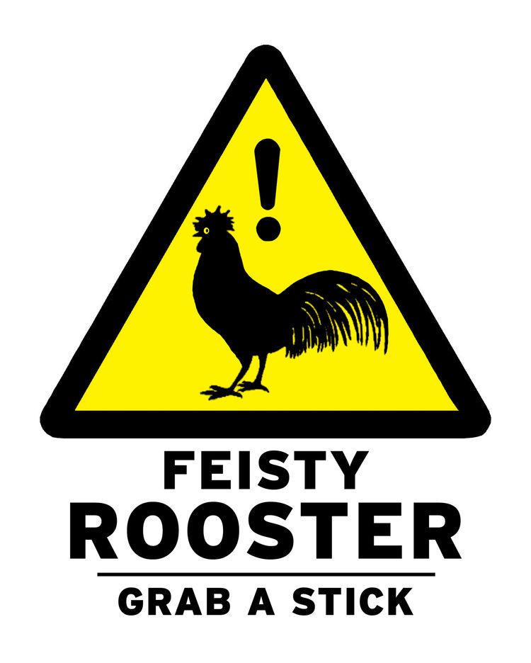 """Here's some background, in Rosen's own words: """"Our adventure with chickens began a year ago when an abandoned rooster wandered onto our property. 'Big Red' became the mayor (and terror) of our street. When he wasn't asserting his dominance over whoever cr"""