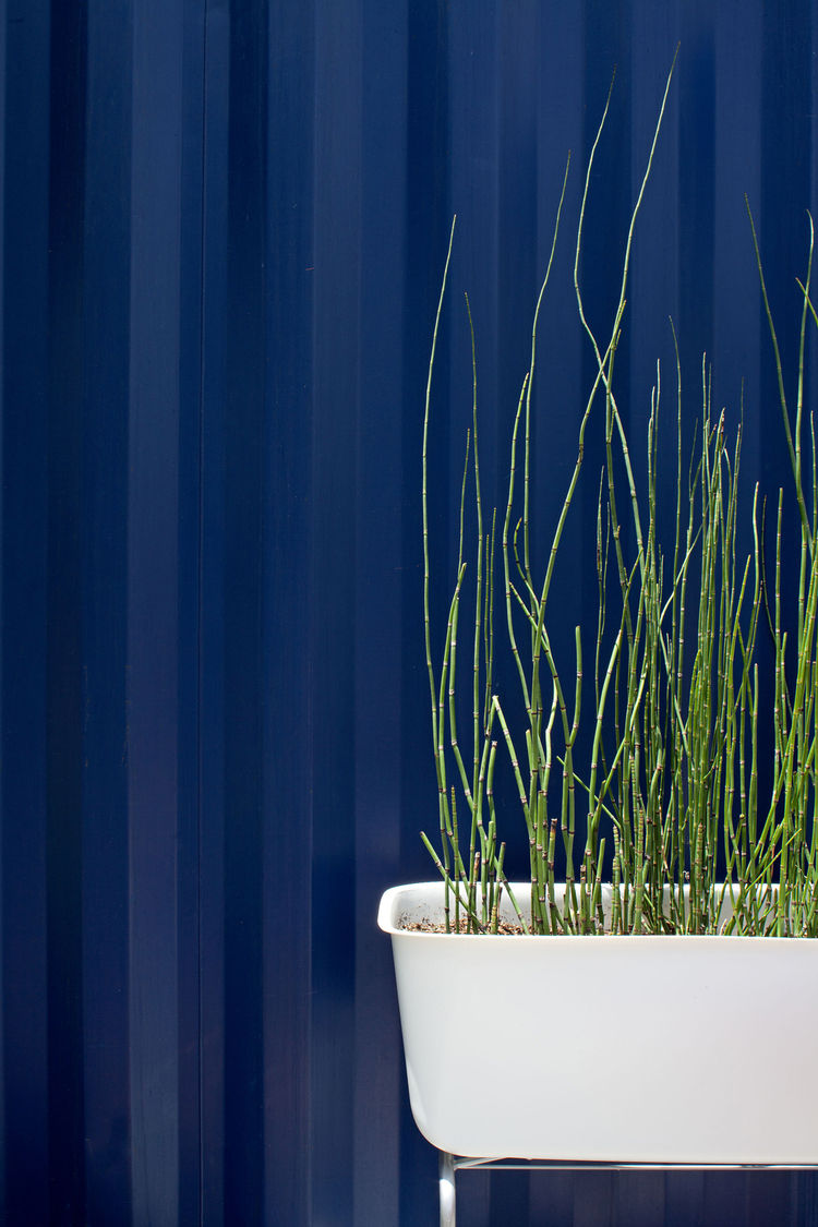 "Reeds grow from a tub outside the steel structure. ""We capture the graywater from the sink and shower, and use it to water the plants in the garden,"" says Hill."