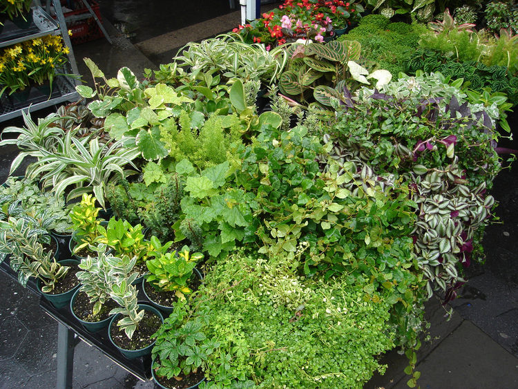 The architects spent several days wandering local Manhattan greenmarkets refining the plant selections.