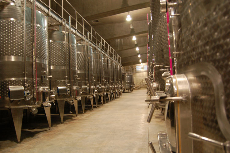 A line of steel vats are housed on the other side of the cellar. The grapes fall gently through trap doors on the floor of the piazza, rather than being pressure pumped, and ferment inside the drums.