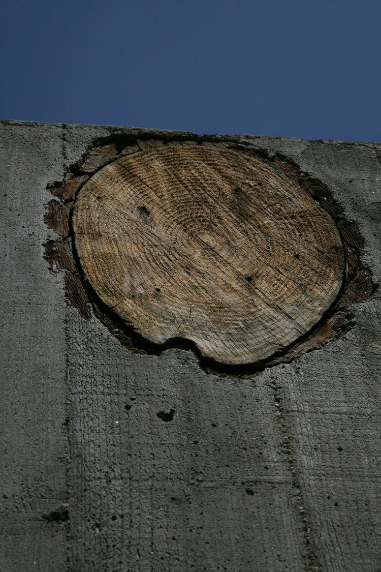 Slices of a pine tree cut down during construction were embedded in the courtyard's concrete walls as a symbol of rebirth; Cho envisions grass sprouting from the rotted wood in a few years.