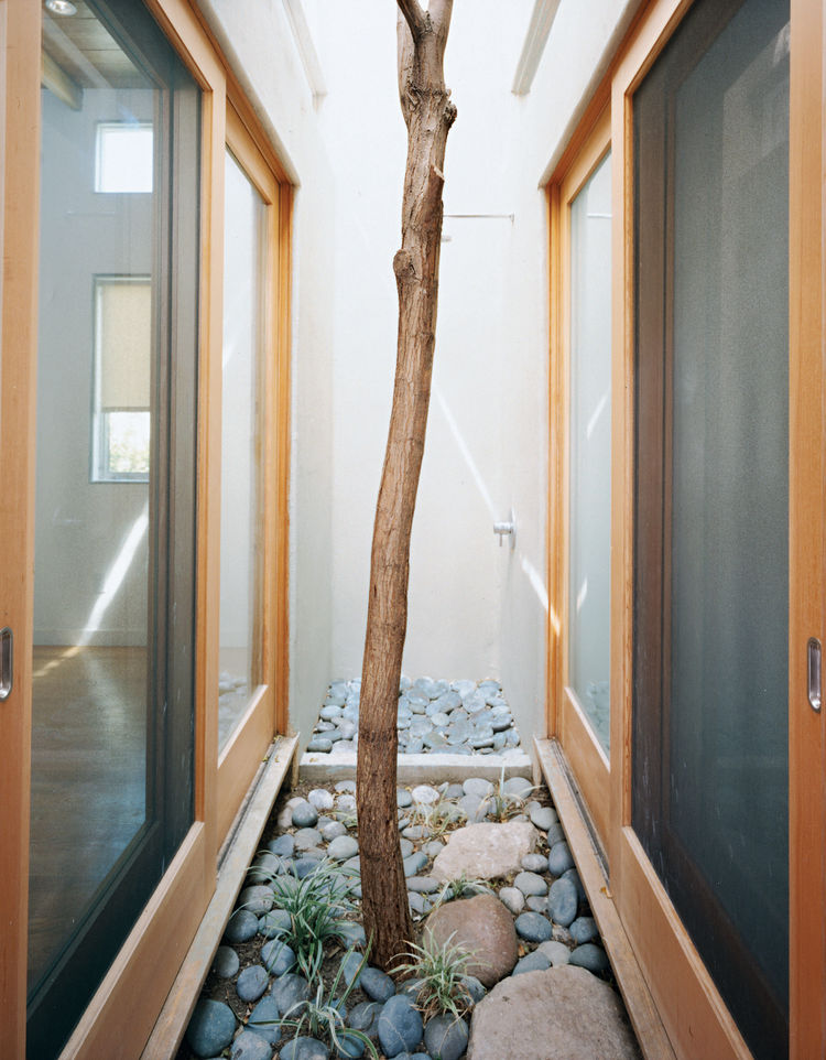 A Robinia tree moved from another part of the site grows in this pocket courtyard and thermal chimney in the heart of the house.