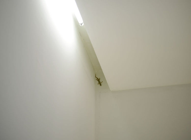 Naturally all that openness makes the Wisnu residence the perfect place for lizards and the like to stop off for a nap.