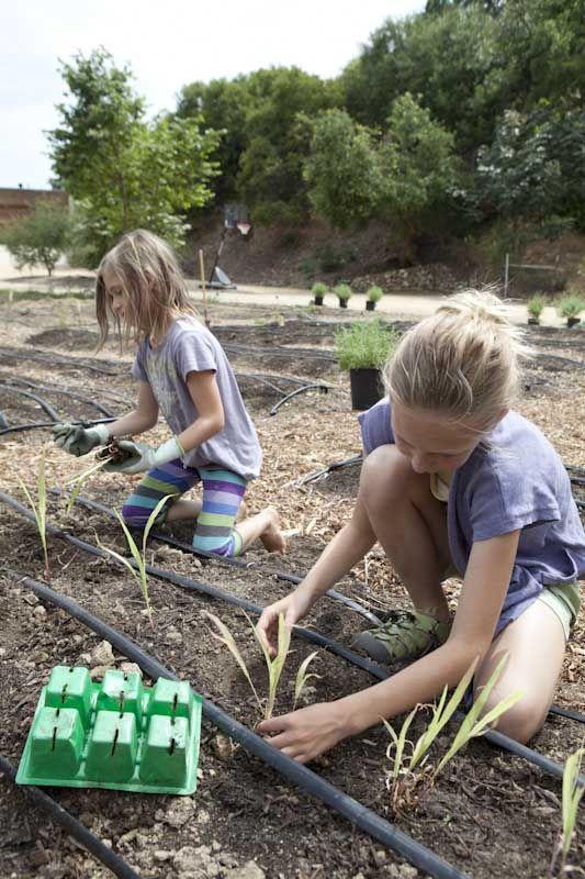 Outdoor gardening in Los Angeles, California