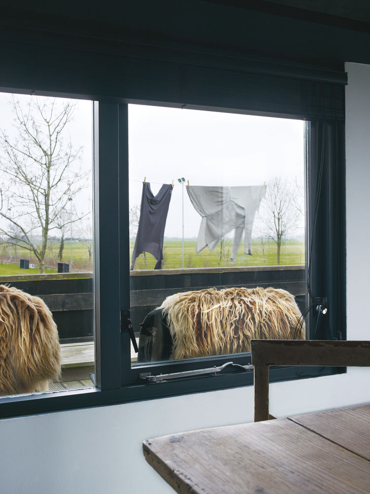 Window view of sheep outside