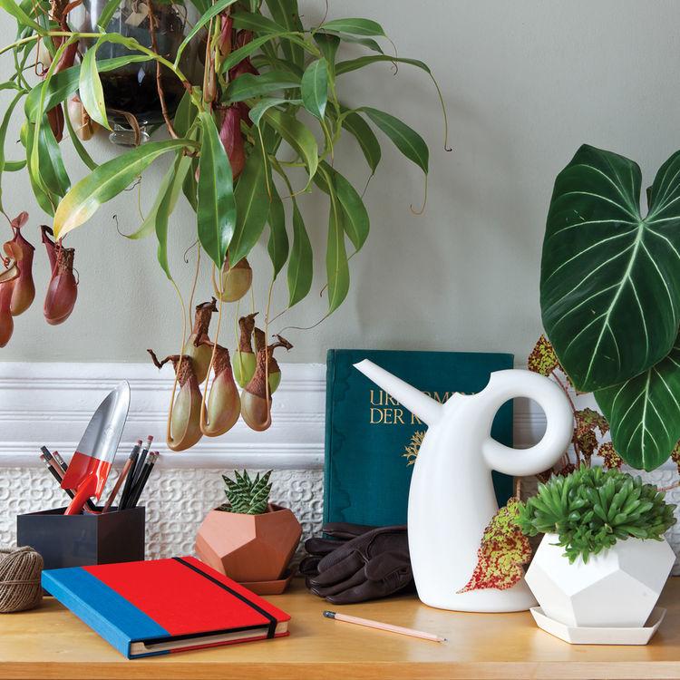 Modern desktop accessories and gardening tools