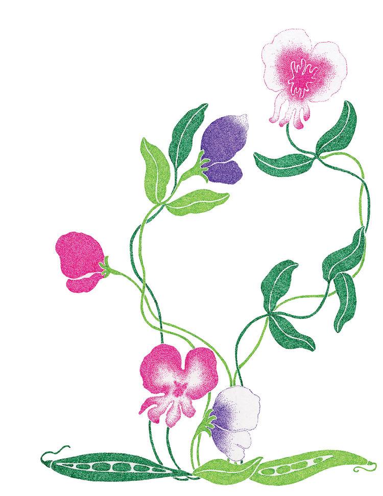 Seedlings illustration by Malin Rosenqvist