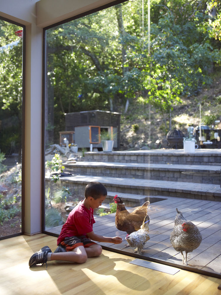 Little boy playing with chickens through the glass window