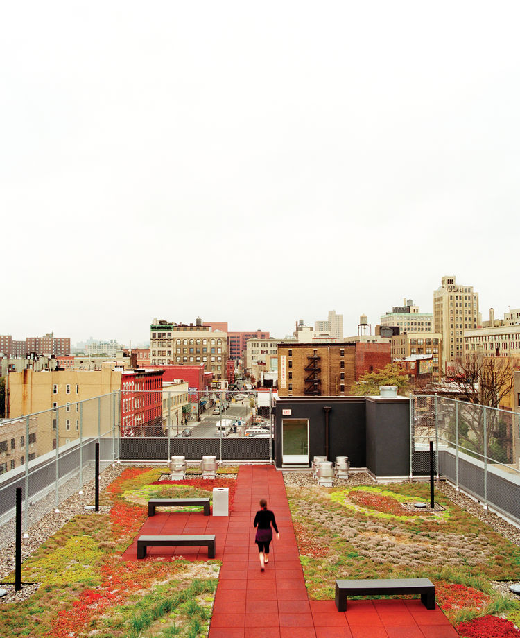 Rooftop garden park in Bronx New York