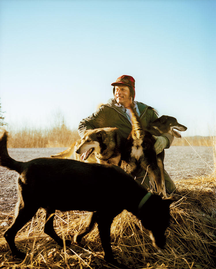 Man playing with dogs on Alaskan field