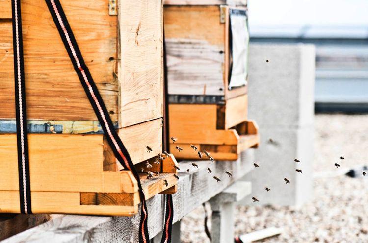 hotel daniel vienna bees rooftop