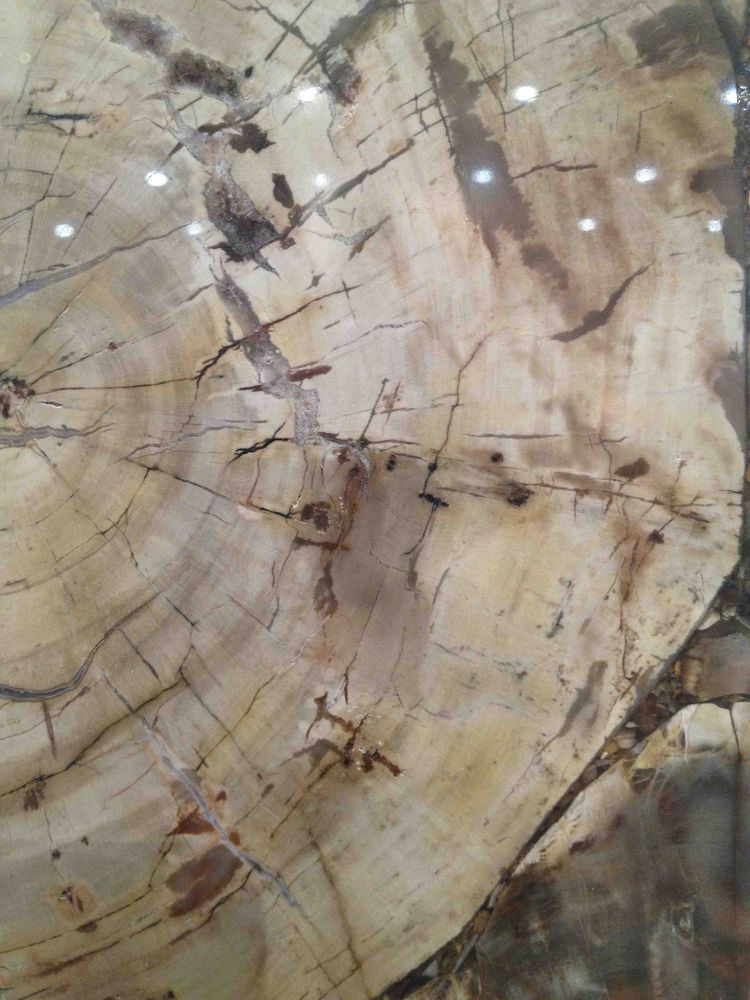 Caesarstone petrified wood