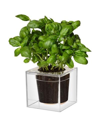 a clear plant pot