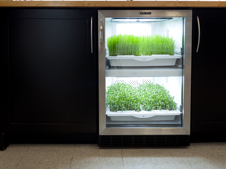 micro-garden for indoor gardening