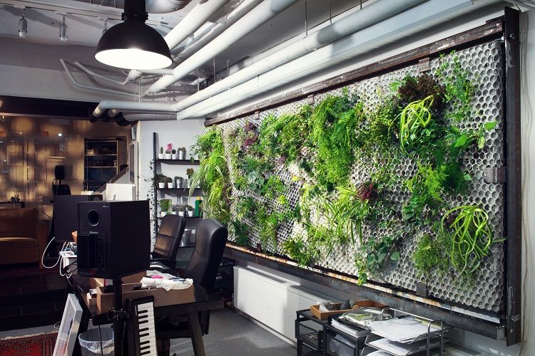 Vertical garden in a Swedish coworking space