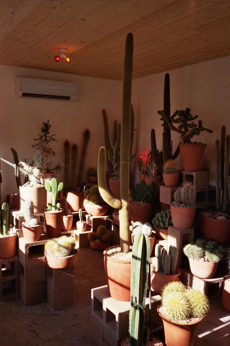 cactus store interior