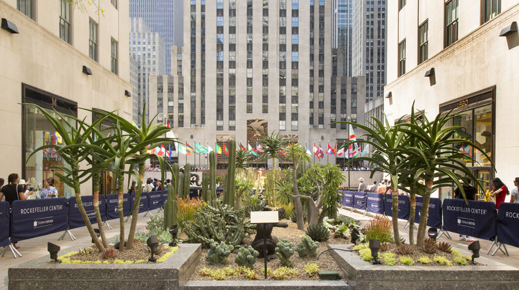 Showcase of cactus garden in courtyard of Rockefeller Center.