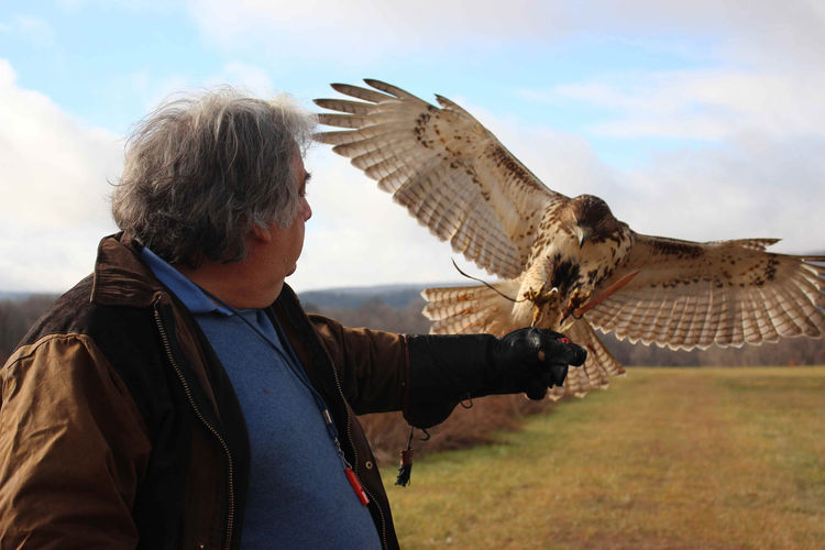 Shope—a licensed falconer—captures, trains, then releases one red-tailed hawk each year
