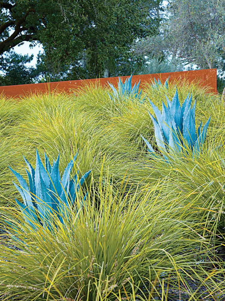 modern landscaping garden california blue agave yard
