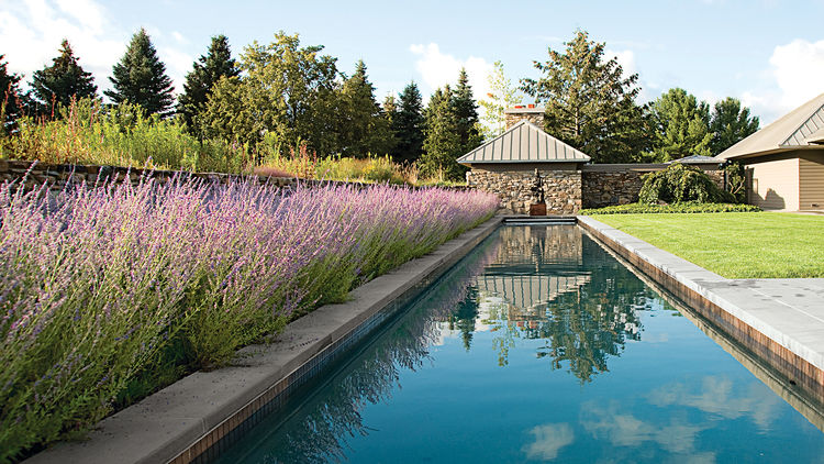 modern landscaping garden midwest meadow saltwater lap pool