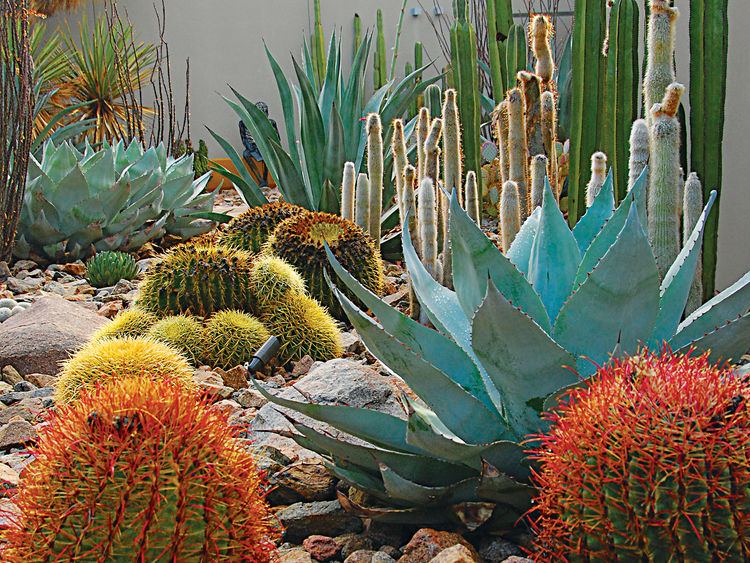 modern landscaping garden southwest native plants