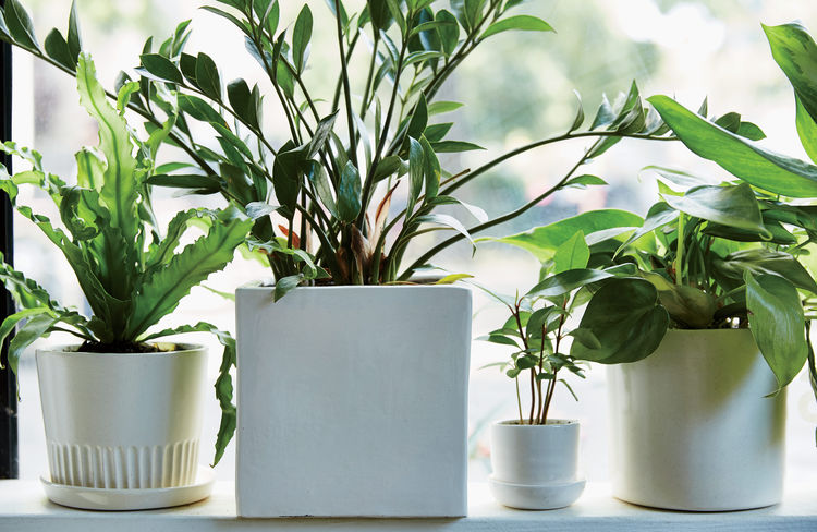 Manhattan store The Sill's in-house line of ceramics paired with its selection of low-maintenance plants.
