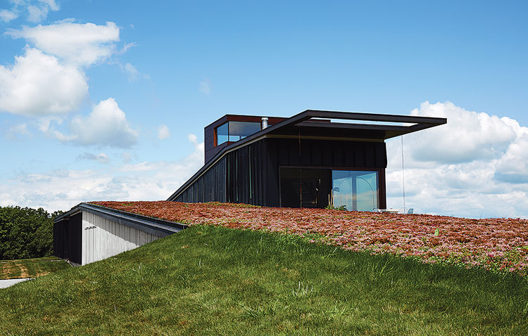 El Topo facade sedum green roof