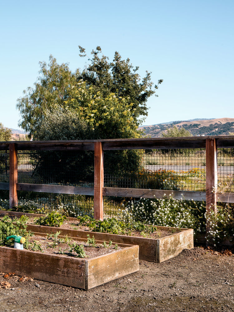 Garden with a locally sourced decomposed granite walkway