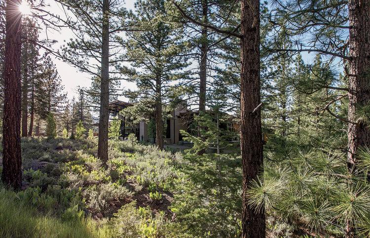 Bancroft Residence exterior nature