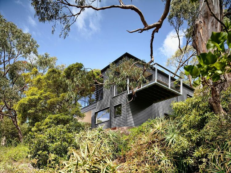 Australian beach house with large gum trees