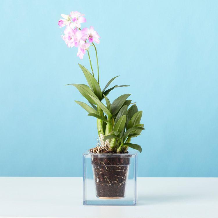 Clear self-watering flower pot