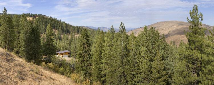 Pine Forest Cabin landscape view