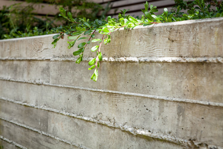 Modern board-formed concrete planters