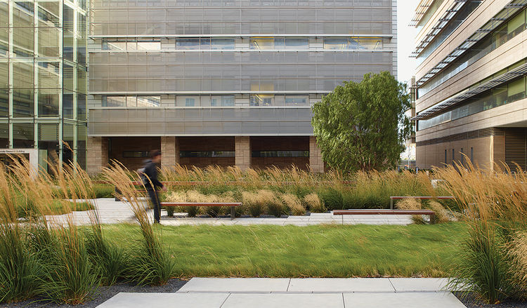 Romancing the Stone Andrea Cochran landscape architect UCSF Smith Cardiovascular Research Building