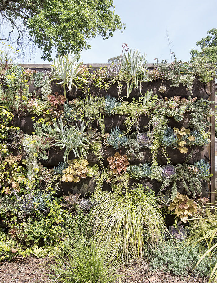 Vertical garden wall at the Stillwater Dwellings prefab in Napa