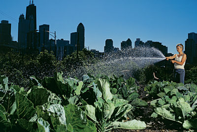 city farm garden thumbnail
