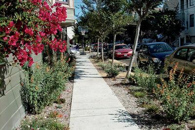 sidewalk garden after one