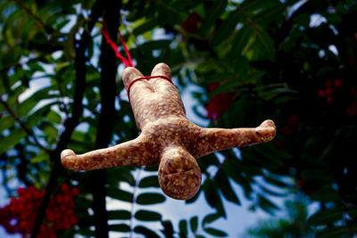 bungee bird feeder